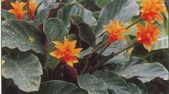 Des plantes supers résistantes - YouTube