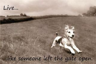 ...The Doors, Dogs, Life, Inspiration, Quotes, Things, Living, Gates Open, Animal