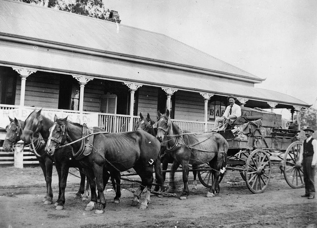Wagon and a five horse team by State Library of Queensland, Australia, via Flickr