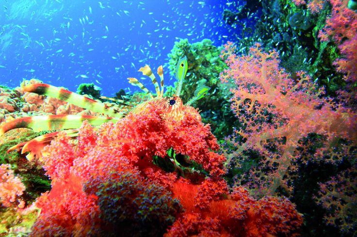Jak rostou korály: Život v podmořské zahradě   Příroda