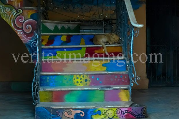 dog-on-painted-stairs
