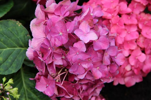 Farbmagie: Flower-Wednesday