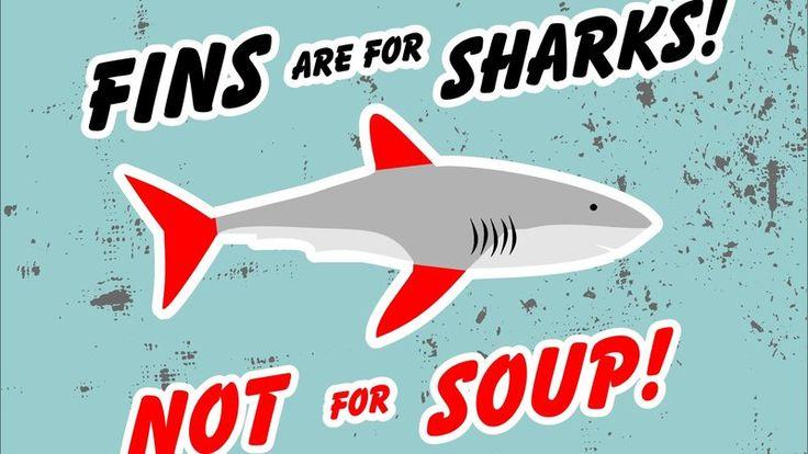 Shark Fin Soup Ban