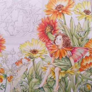 Browse shizuzuzuk's Instagram . 〔マリーゴールドの妖精〕。 THE MARIGOLD FAIRY. . あと3名の妖精さんで見開き完成ですヽ(´▽`)/。 2016/8/10。 . #flowerfairies #シシリーメアリーバーカー #lineartbook #フラワーフェアリーズ #コロリアージュ  #大人の塗り絵  #大人のぬりえ #색칠공부 #著色 #著色本 #colorpencil #coloringbooks #coloriage #coloringbook #adultcoloring #adultcoloringbook 1313648124707615012_2459362795