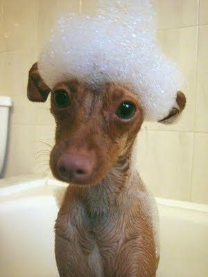 What? You didnt know the proper attire for baths was a mini sombrero made of bubbles?