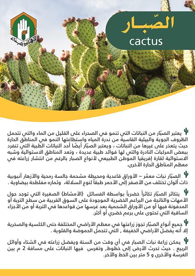 تعرف على الصبار Cactus Veg Garden Plants Cactus Plants