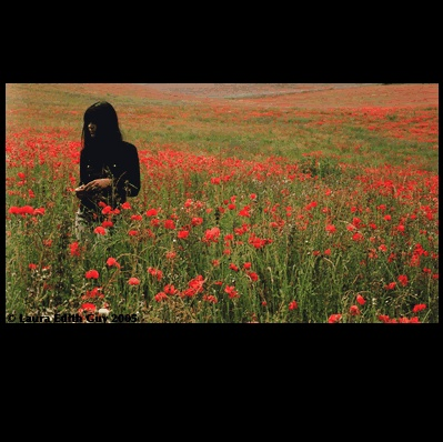 Bat for Lashes - Walking through a field of red poppy #bat_for_lashes #red_field #red_poppy #poppy