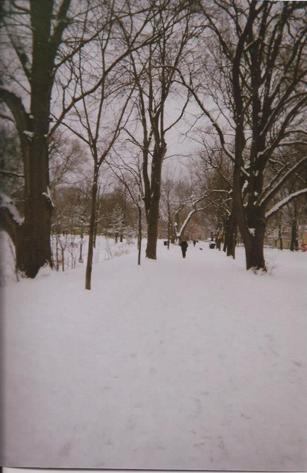 Trinity bellwoods in the snow
