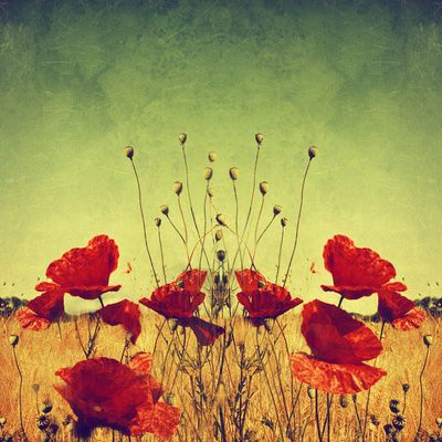 pOp aRt Art Print by Dirk Wuestenhagen Imagery   #Flowers #Photography #Nature #Art #Print #Red #Print #Wallart #Decor #Homedecor