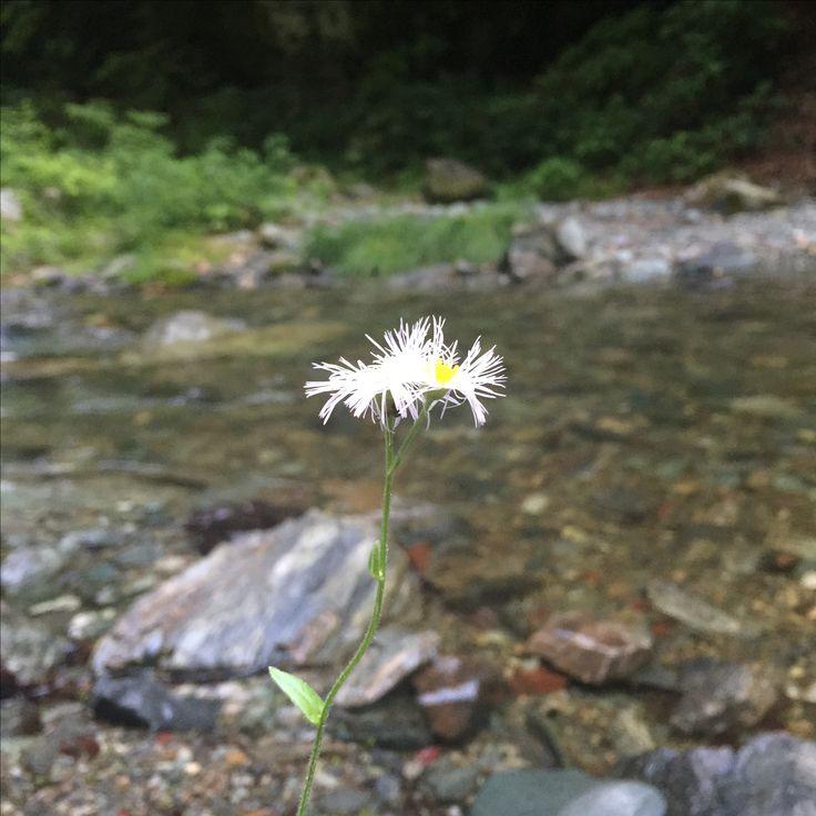 川の側に咲く一輪の花
