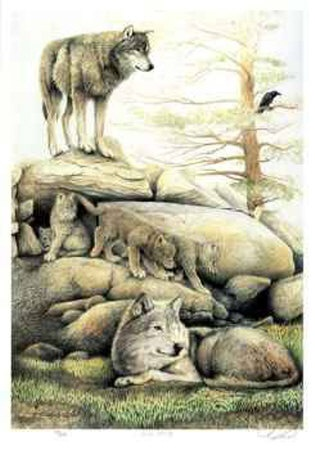 Wolf Family - Gray wolves are returning to the forests of North America. Are you afraid? Come learn about wolves and tech children all about wolves in this unit study for classroom teachers and homeschoolers... http://www.squidoo.com/graywolves