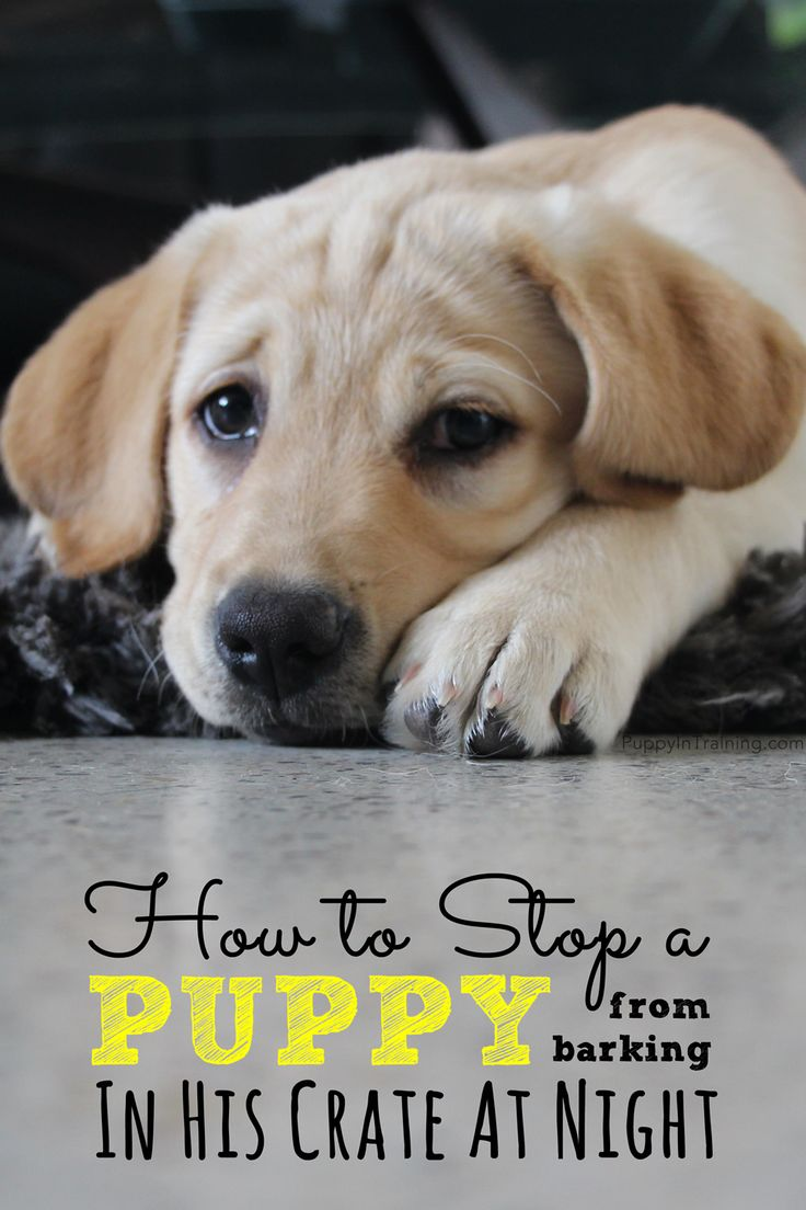 How to stop a puppy from barking in his crate