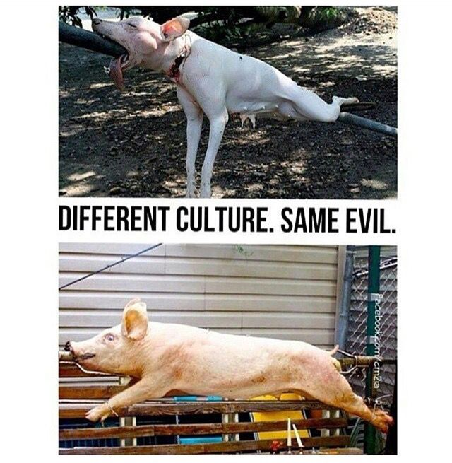 Image result for i want to live go vegan