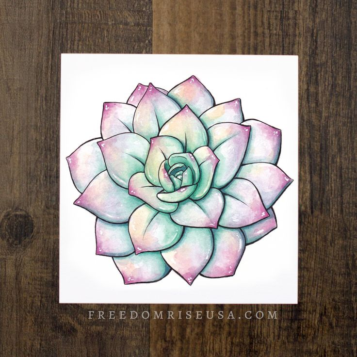 Echeveria succulents never cease to amaze with all the range of colors, tones + shades. This succulent may have been a little stressed but those colors! ----- Watercolor + Ink Print on 60lb Canvas Pap