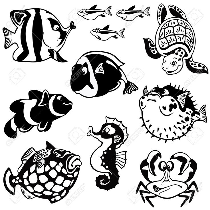 214 best Animales marinos images on Pinterest  Animal Animals