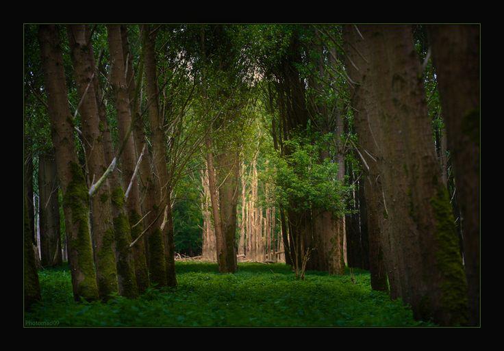 Afbeeldingsresultaat voor roodkapje bos