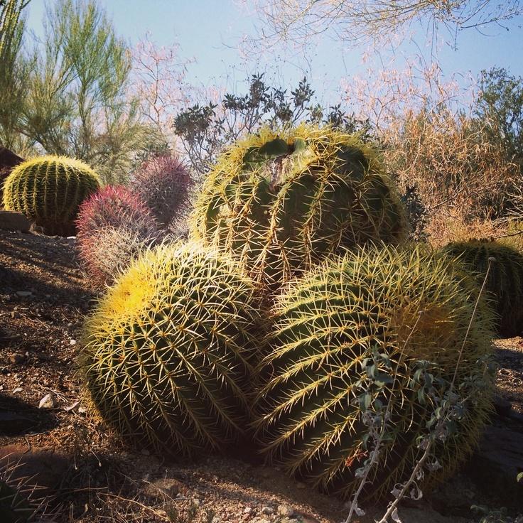 Palm Desert, California.