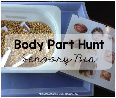 TeacherMomPlus3: Body Part Sensory Bin