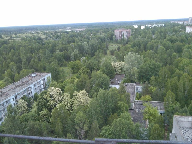 Pripyat residential area overrun by nature