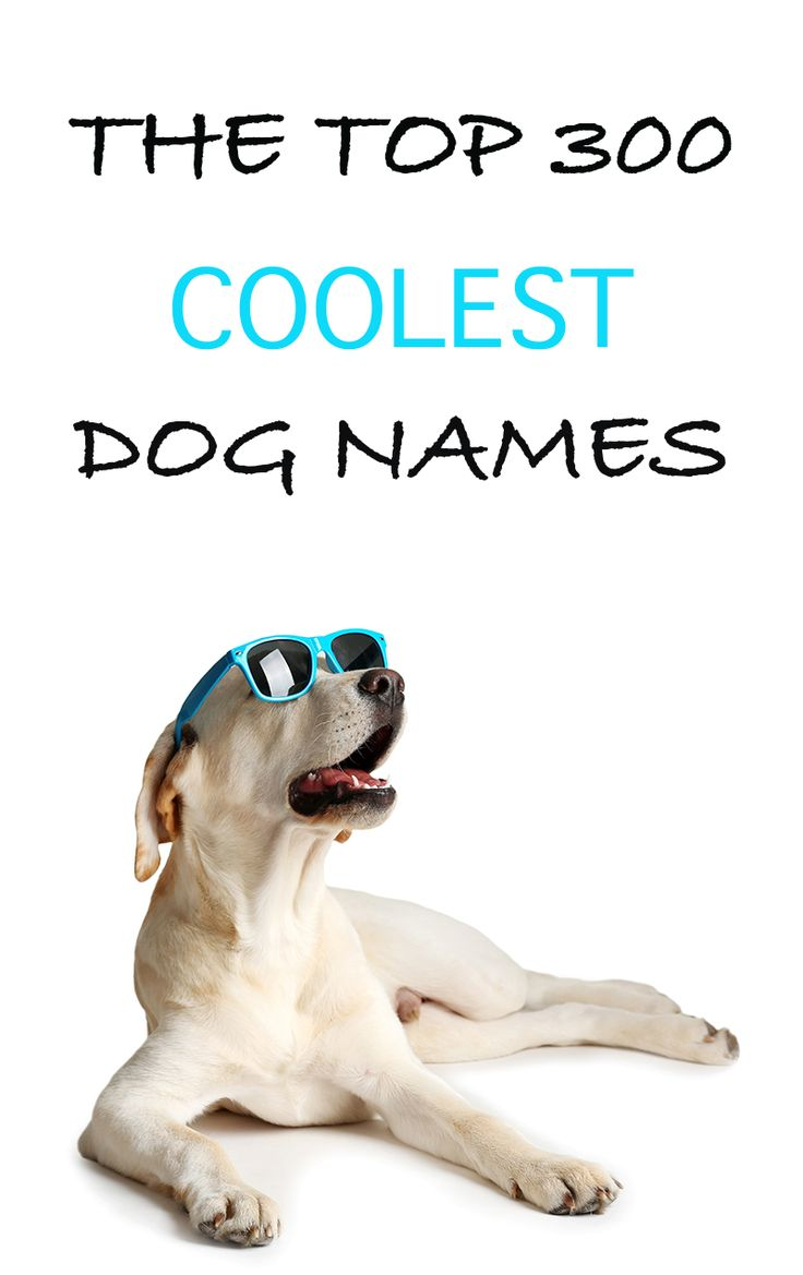 The best names for cool dogs! Loads of ideas and inspiration