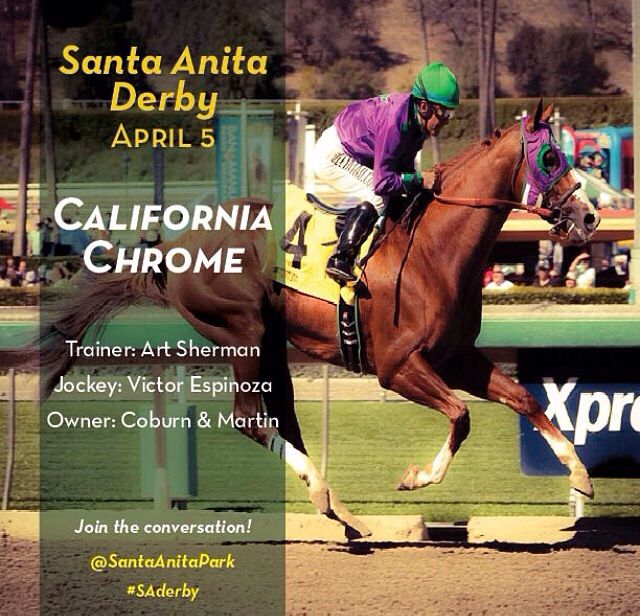 81 Best Images About California Chrome People S Hero On
