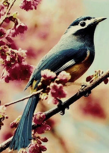 17 Best Images About Birds On Pinterest