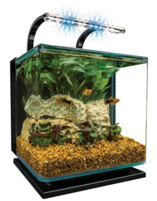 152 best betta fish tanks images on pinterest fish for Betta fish tanks for sale