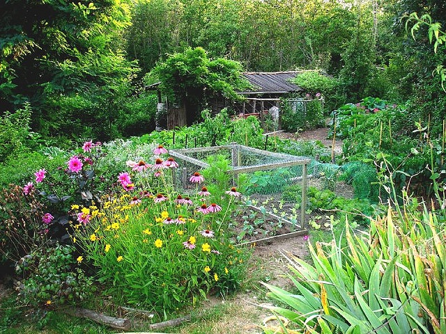 beautiful potager: Outdoor Ideas, Cottages Gardens, Wild Gardens, High Summer, Beautiful Work, Vegetables Gardens, Backyard Oasis, Backyard Gardens, Beautiful Gardens