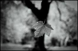Uma folha seca de outono   Cai sobre o chão sem dono   Em completo abandono...