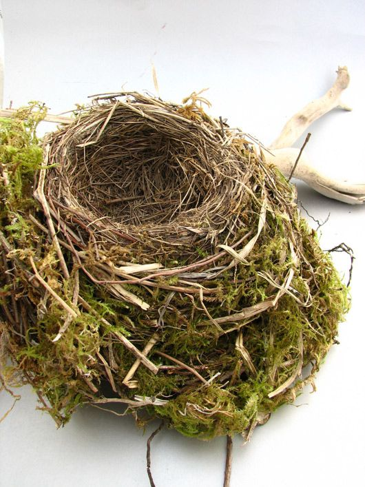 303 Best Images About Bird Nest On Pinterest Robin Egg