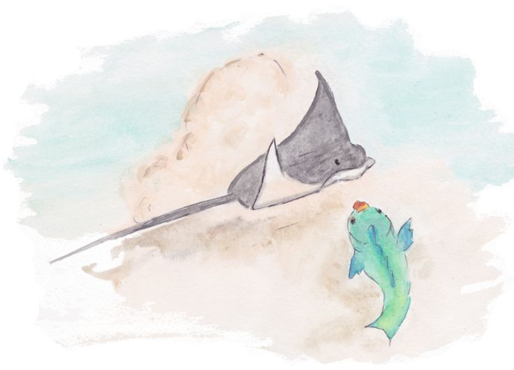 "Illustration- ""A Parrotfish's Tale"" by Christina Maas parrotfishpublishing.com // eagle ray and parrotfish"