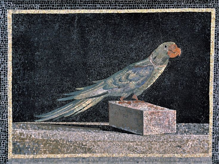 #AlexandertheGreat had quite a few cities that were named after him...nothing new there. This species, the #Alexandrian #parakeet which is depicted in this lovely #Hellenistic #mosaic was prized among #royals and was also named after the young #greek king of #Macedonia - #mosaicart #artist #artwork #birds