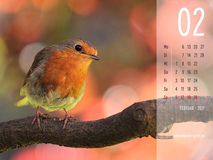 Februar - Kalender 2017 - Vögel