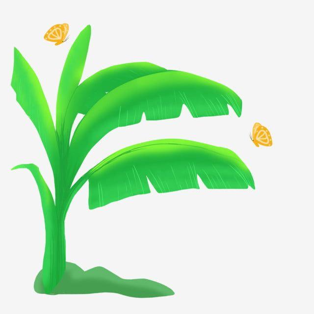Banana Tree Green Trees Banana Trees Banana Leaves Green Leaves Banana Leaf Elements Green Plants Plants