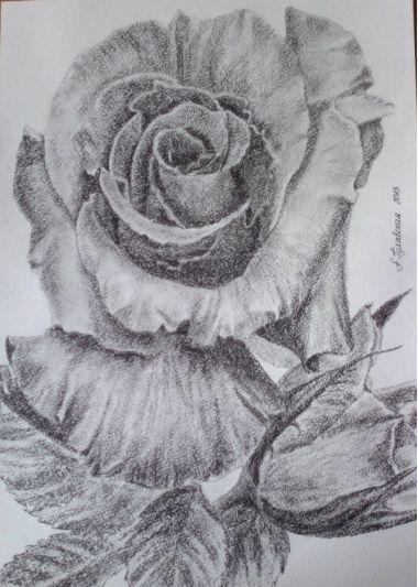 Картины :: Роза | Купить картину у художника