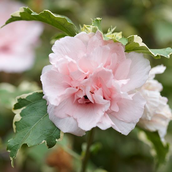 Best Pink Flowers for Your Garden