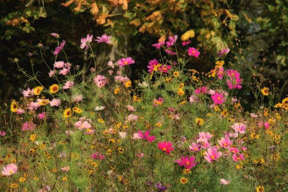 A beautiful mixture of wild flowers. A splash of colour to bring a smile to your face. I have been visiting some of the wild flower meadows that