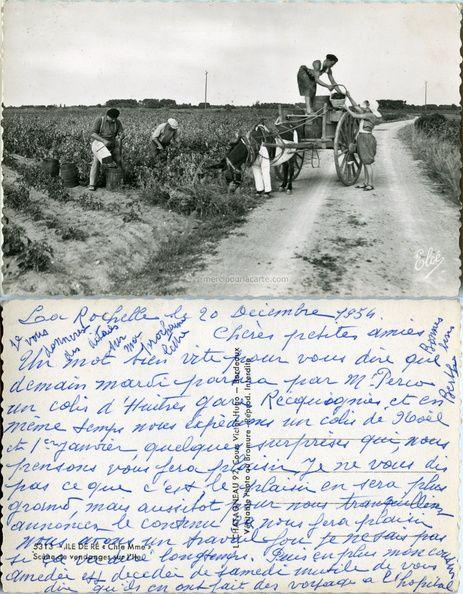 Ile de Ré - Scène de vendanges sur l'Ile (from http://mercipourlacarte.com/picture?/97) Éditeur Elcé - L. Chatagneau, Bordeaux -
