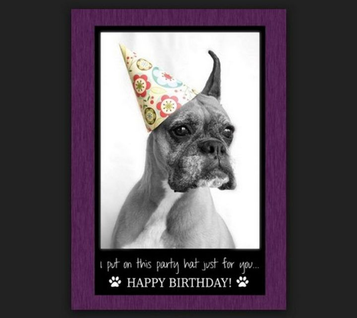 101 Funny Happy Birthday Dog Memes For Paw Lovers Everywhere Happy Birthday Dog Meme Happy Birthday Quotes Funny Happy Birthday Dog