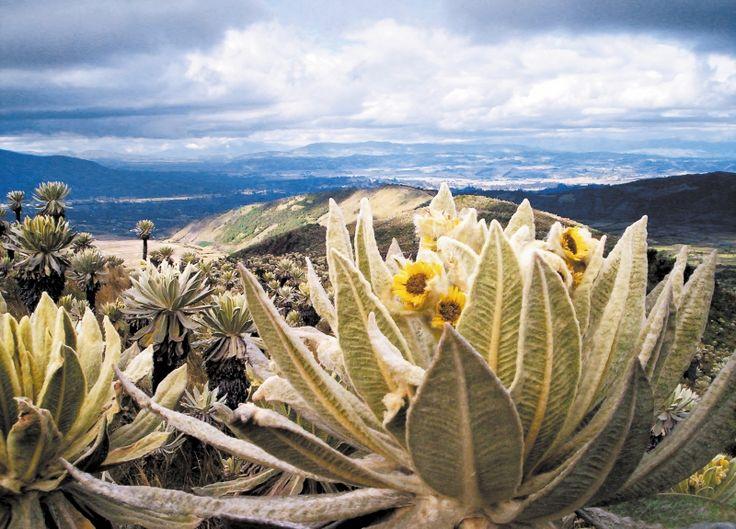 La Unión Europea, el Instituto Alexander von Humboldt, cinco corporaciones autónomas regionales y dos ONG internacionales se han articulado para fortalecer el mantenimiento de la biodiversidad y el recurso hídrico de siete páramos en Colombia, Ecuador...