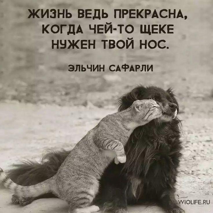 ЭЛЬЧИН САФАРЛИ
