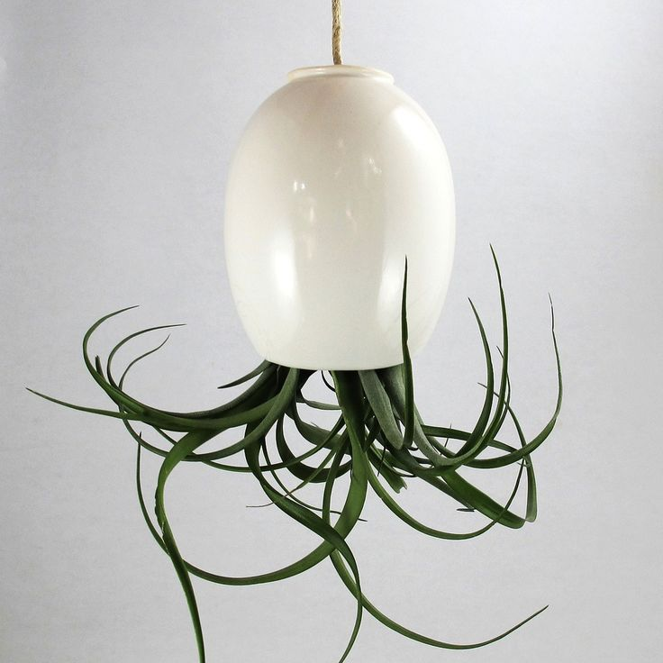 Hanging air plant from Mudpuppy, on sale on Fab.com