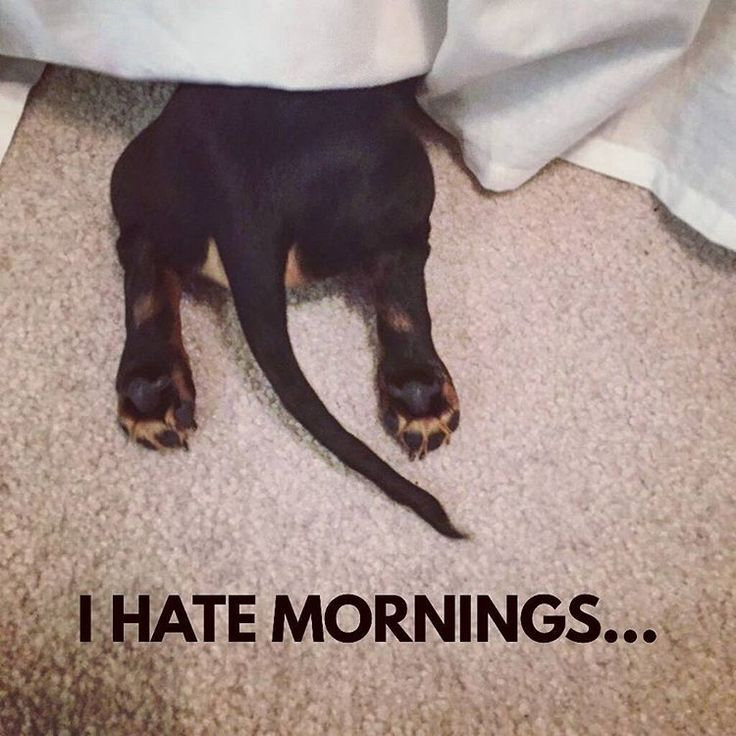 Me too... .  @hudsontheminidachshund