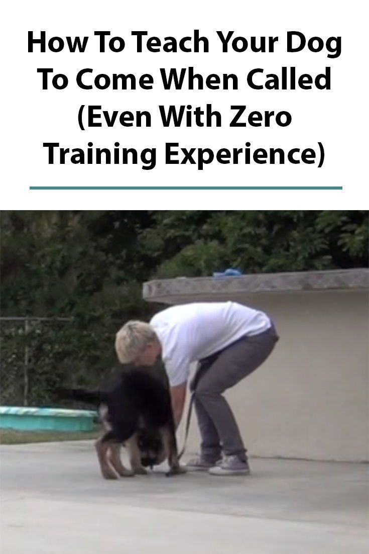Teach Your Dog To Come When Called Dog Clicker Training Dogs