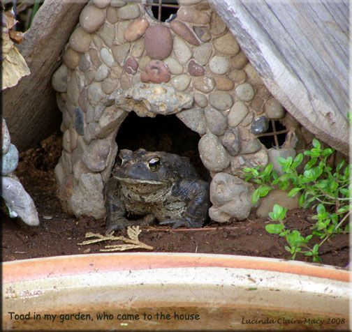 Willodel: MAKING A GARDEN TOAD HABITAT TUTORIAL ~ yes, I found him again, he lives underneath the water spout ~ wanna extend his habitat??