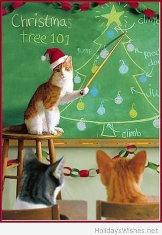 245 best Christmas with Critters images on Pinterest | Animals ...