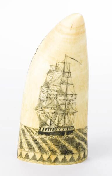 Scrimshaw artist William A. Gilpin depicted  hisship, the Ceres, of Wilmington, Del., on one side of the sperm whale tooth.