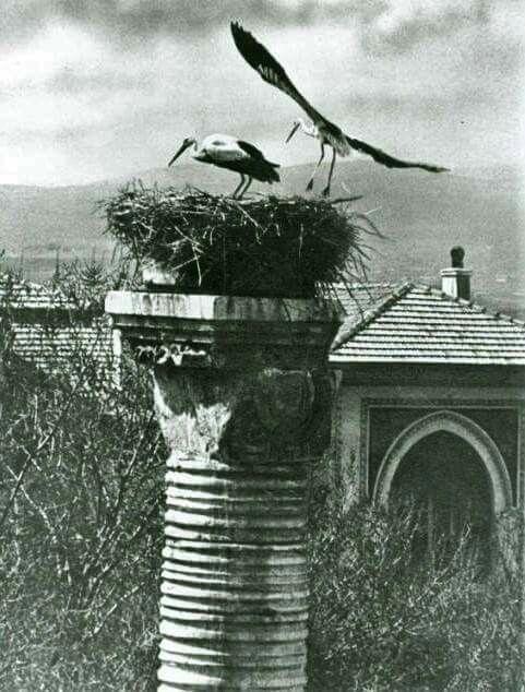 Julien (Belkıs) Sütunu'nun Sezonluk Kiracıları - 1946.  Fotoğraf : Foto Rıdvan (Kırmacı)...