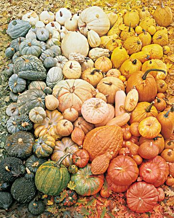 pumpkins, winter squash, fall leaves