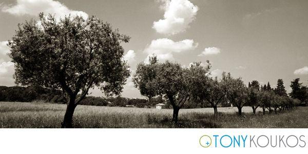 nature, trees, places, Tony Koukos, Koukos